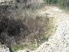 anecropoli-etrusca-peschiera-zona-mattonara-071