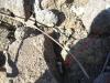 copia-di-anecropoli-etrusca-peschiera-zona-mattonara-041-copy-copy